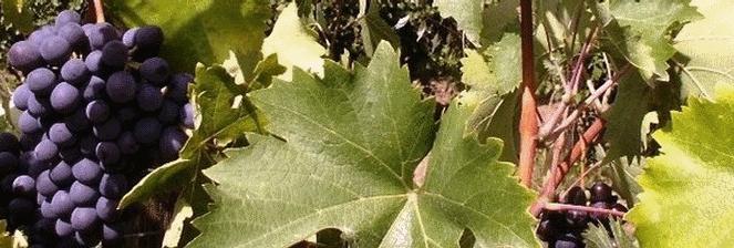 Ektimo-4bannerwine1-crop663