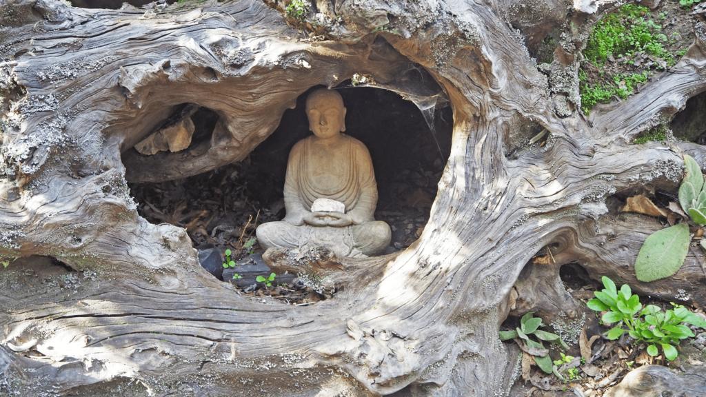Buddha in Osmosis garden