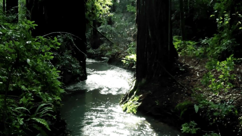 Fife Creek