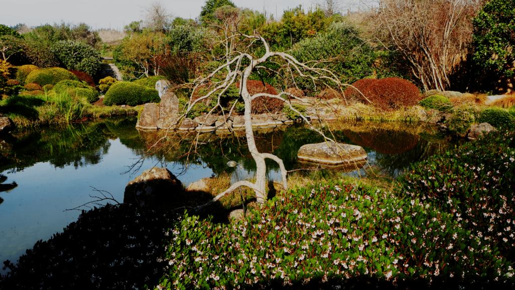 Osmosis garden pond