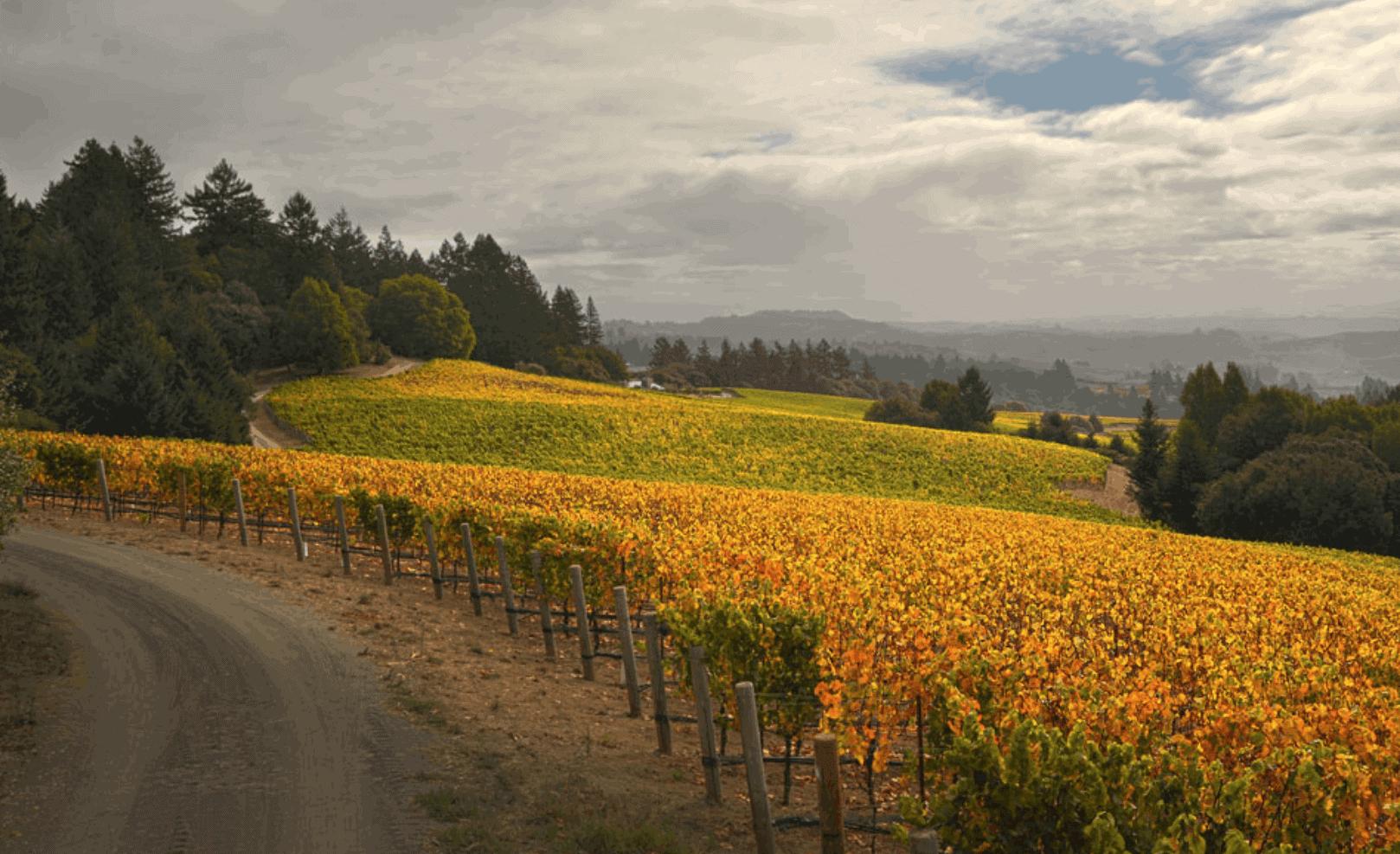 Ramey Wine Estates