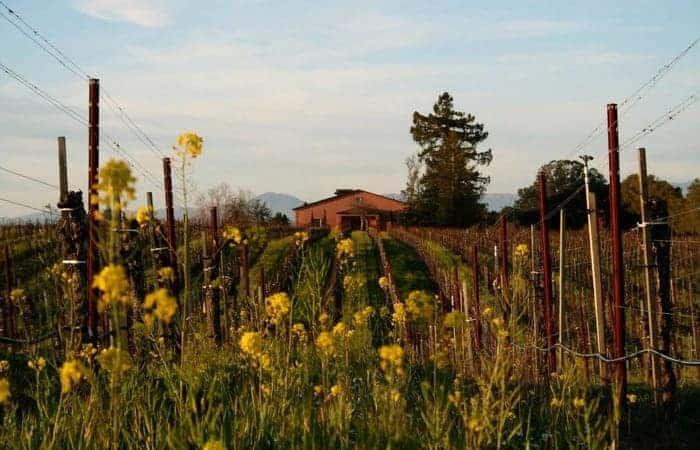 Palligrini Wine Olivet Lane